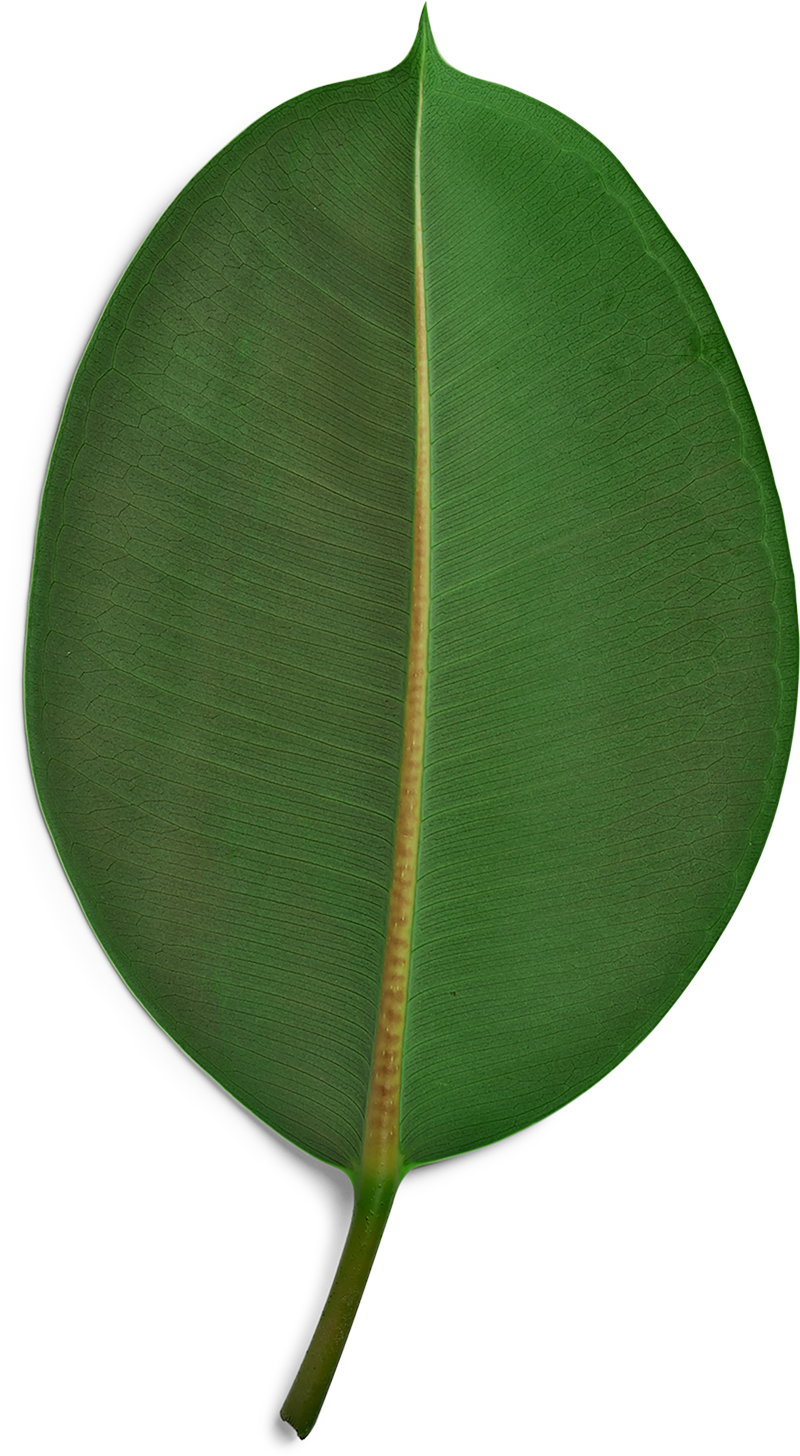 A green palm leaf